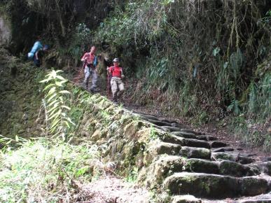 Åter i regnskogen. Många trappor, stela ben.
