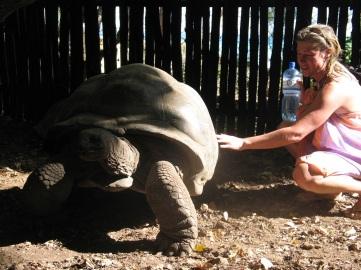 Jättesköldpadda på Prison Island.