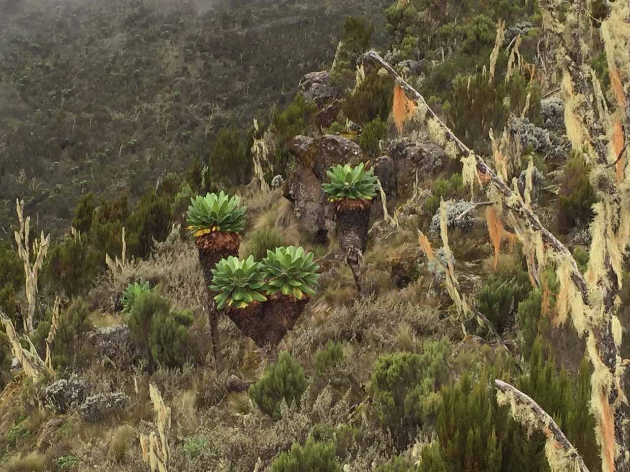 Kili Dag 2 Lustiga växter