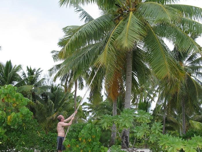 Cook Kokosnötsplock