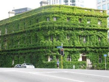 NZ Aukland gräshus
