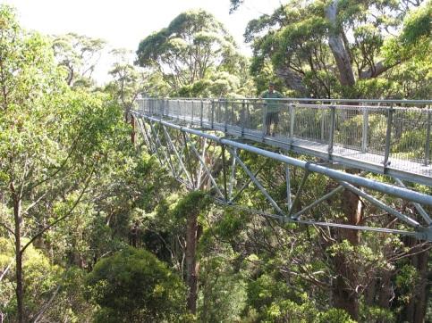 Tree Top Walk, på 40 m höjd.