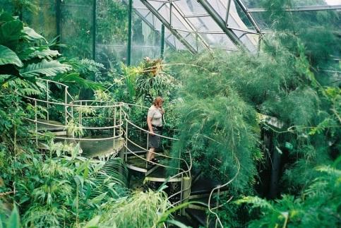 Konstgjord djungel