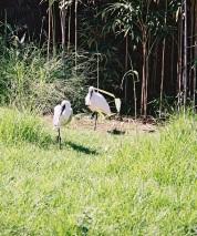 29. Fåglar av nåt slag
