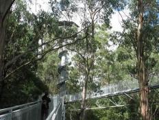 Otway Tree Top Walk