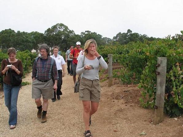 Promenad bland vinrankorna